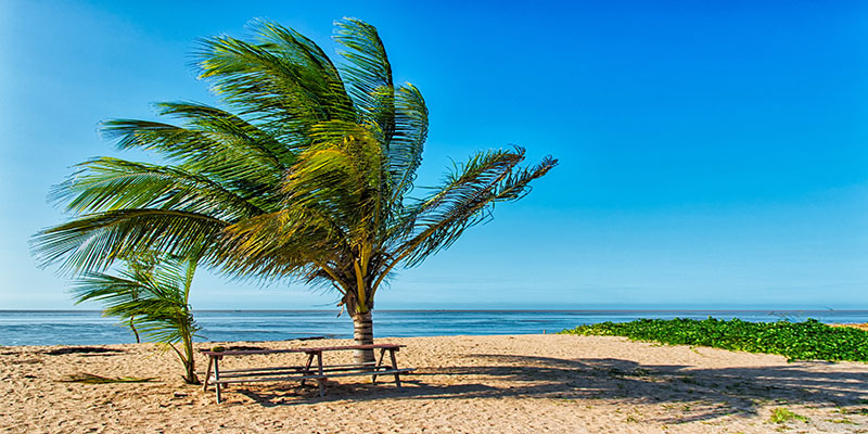 Suriname HVO