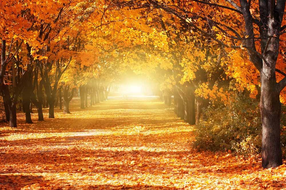 Vakantie ideetjes tijdens de herfst